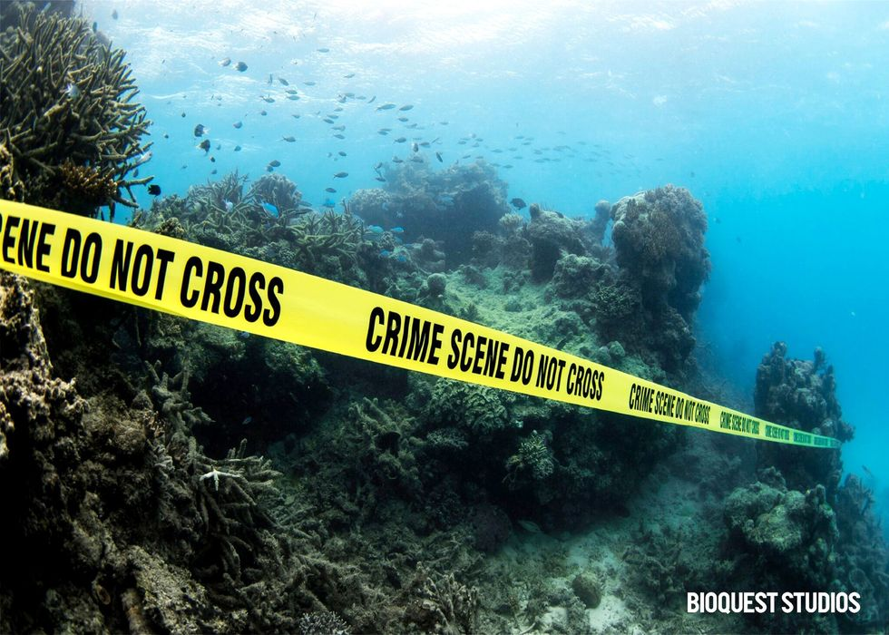 Fossil Fuel Industry Is Killing the World's Coral Reefs