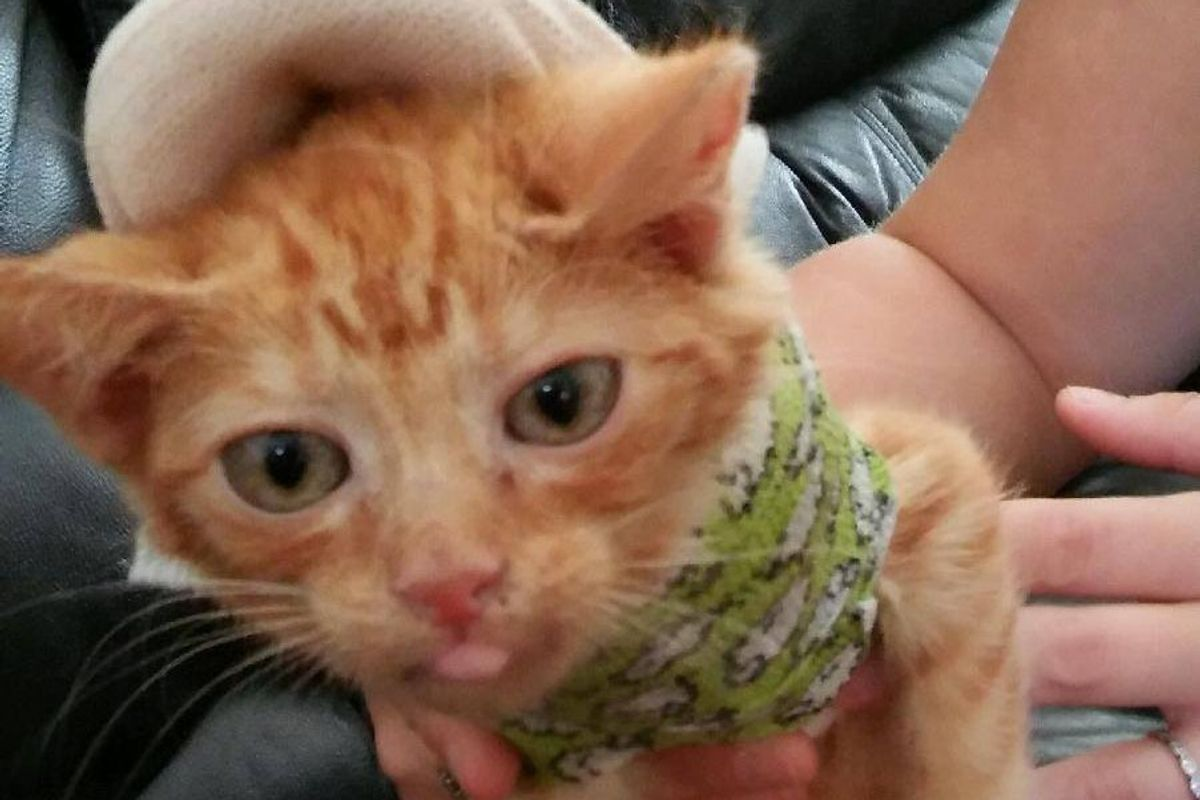 Body Cast Saves This Kitty's Life and Helps Him Get Stronger