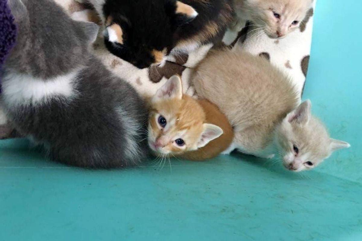 Seven Orphaned Kittens Barely Escape Huge Thunderstorm
