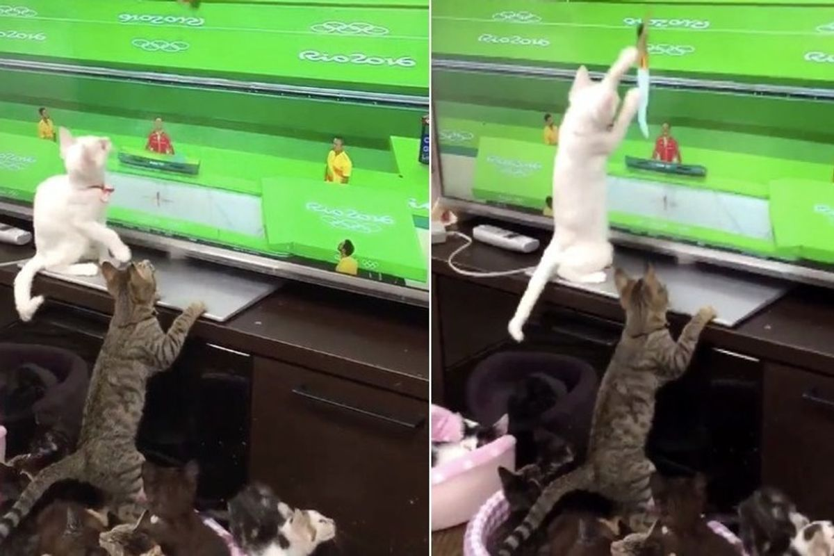 Cats Try to Give Athletes at the Olympics a Helping Paw