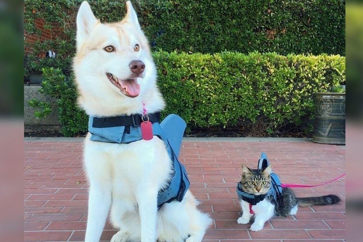 Heartbroken Kitten Wouldn't Eat Until She Met This Dog