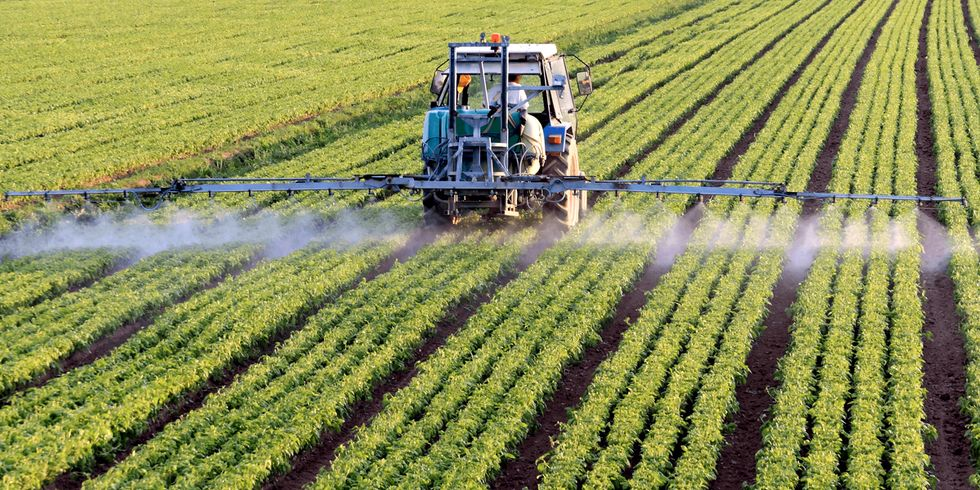 Holding Monsanto Accountable for Growing Public Outcry Over the Dangers of Glyphosate