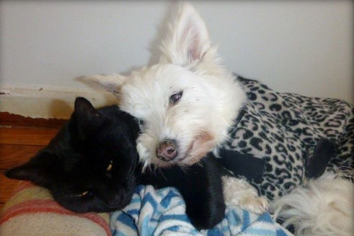 'Unwanted' Cat and Senior Dog Found Each Other and Haven't Stopped Cuddling