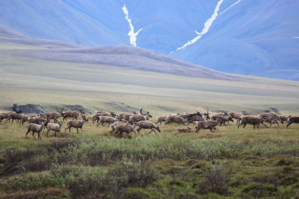 Arctic Refuge Hit With Double-Whammy: Climate Change and Oil Development