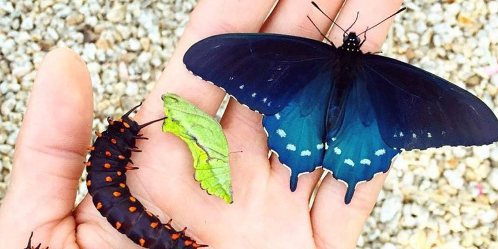 This Guy Just Revived a Butterfly Species in His Backyard
