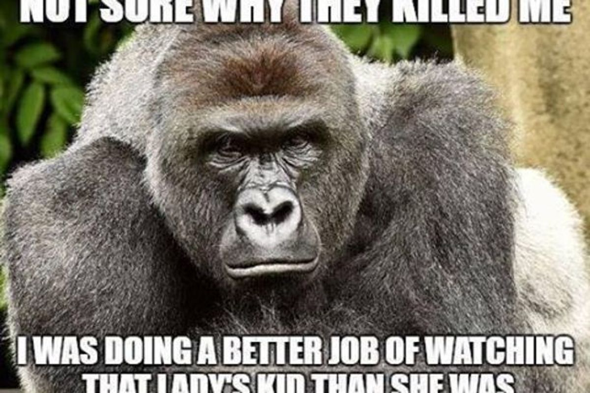 UPDATE: The Cincinnati Zoo Has Deactivated Their Social Media Thanks To Harambe Memes