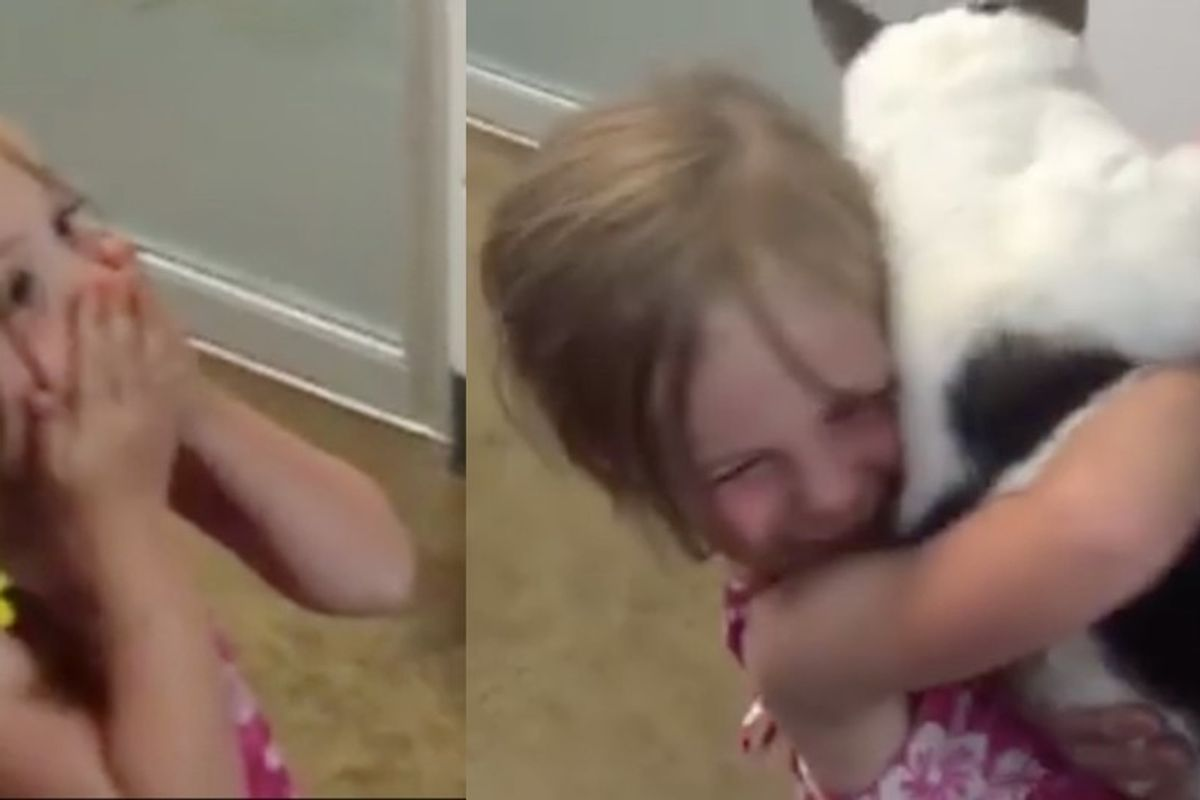 Girl Surprised to Find Her Beloved Cat in Shelter After He Went Missing for 3 Years