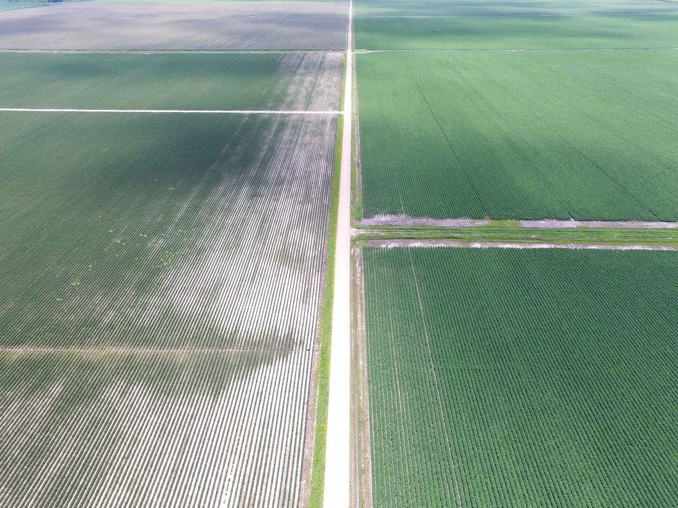 Illegal Herbicide Use on GMO Crops Causing Massive Damage to Fruit, Vegetable and Soybean Farms