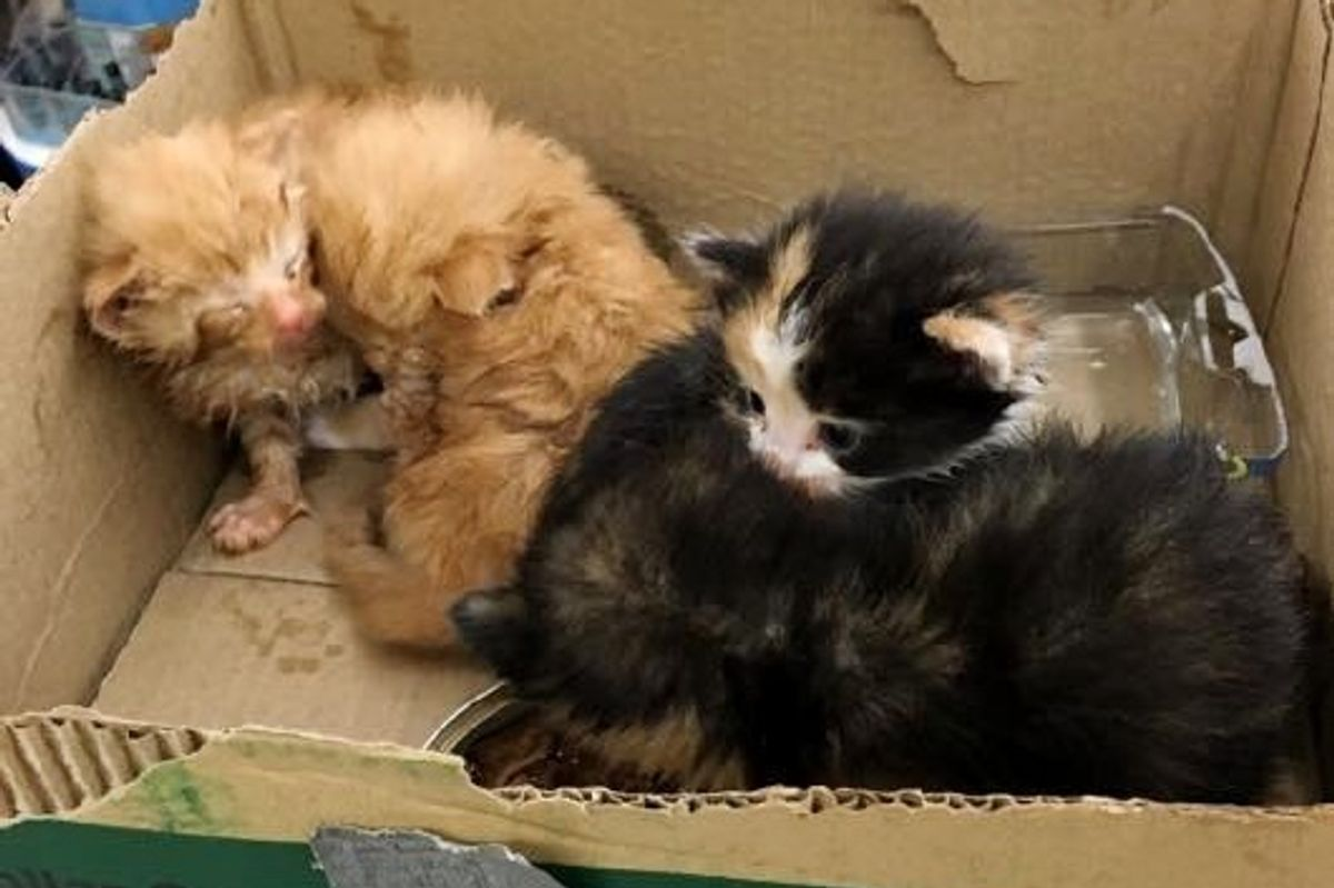 People Come Together to Save Four Kittens Found By Dumpster