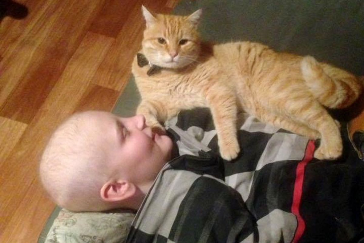 Boy Saves Abandoned Cat From Street, the Kitty Returns the Favor