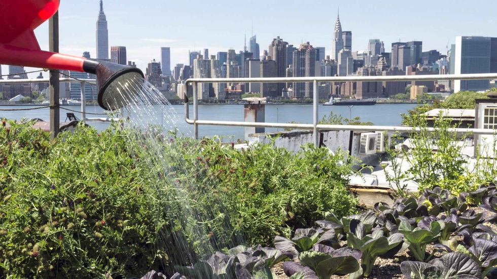Urban Farming Is Revolutionizing Our Cities