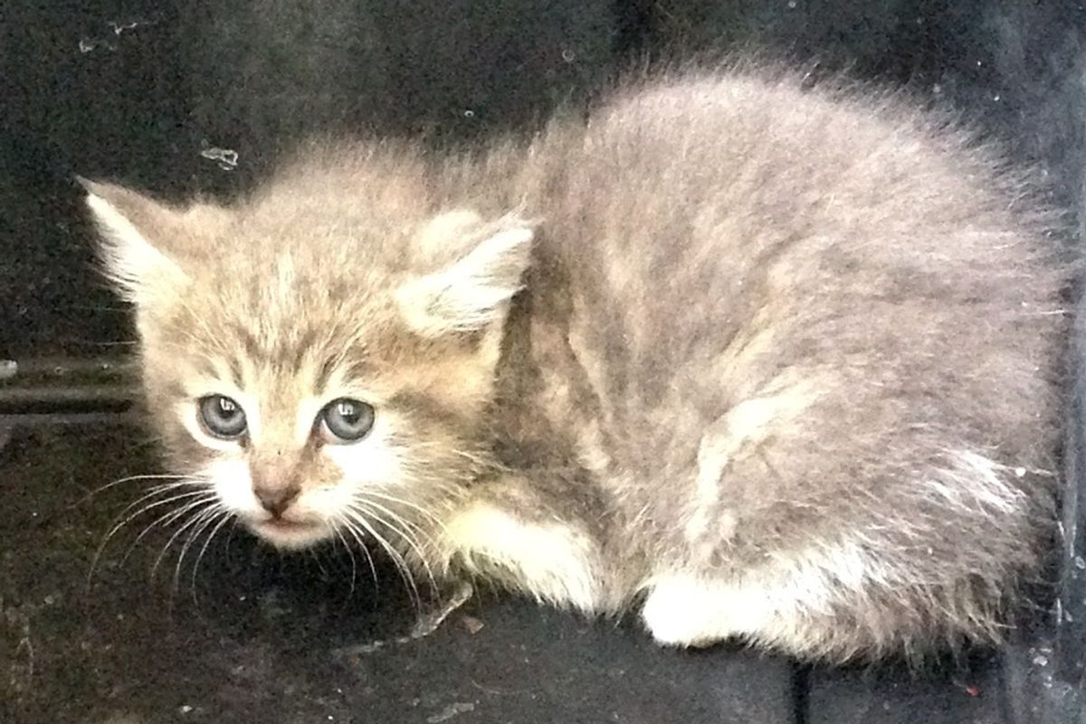 Kitten Found in Garage Fears for His Life Until They Show Him Love