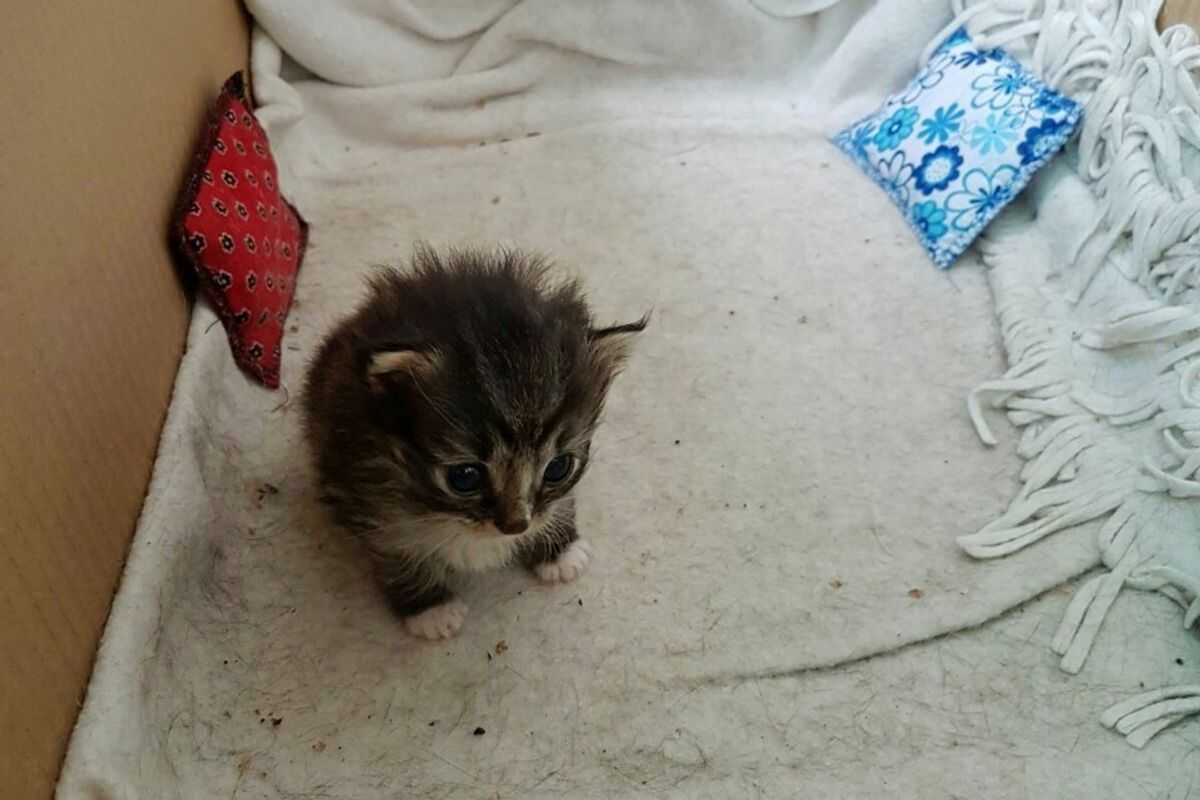 Stray Cat Brings a Tiny Surprise to Woman who Gave Her Food...