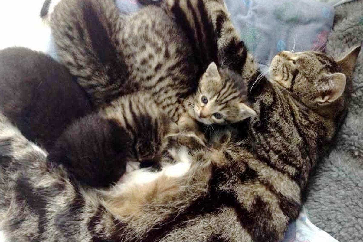Loving Cat Mother Tracks Down Her Missing Kittens