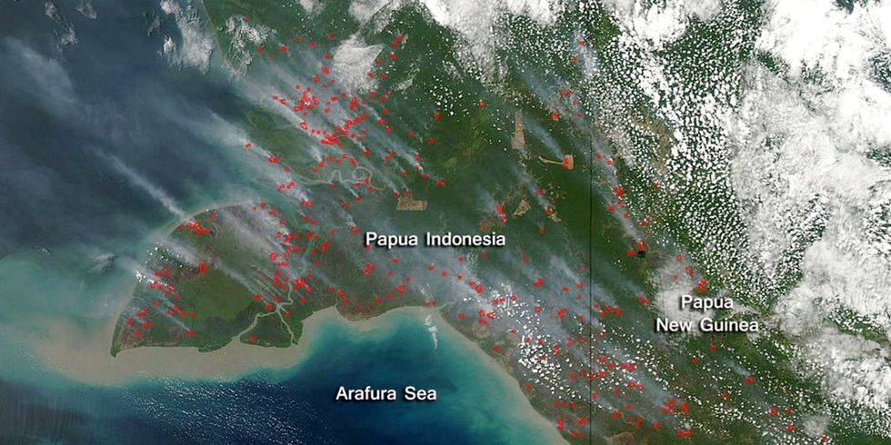 Burning Across Borders: The Health Toll of Palm Oil Fires