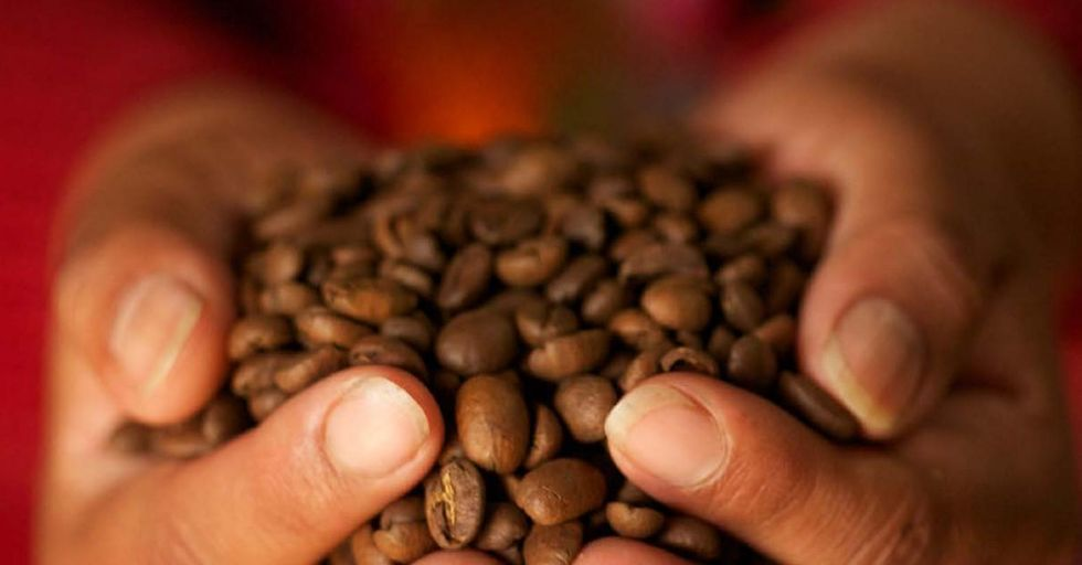 Climate Change Could Cut Coffee Production by 50%