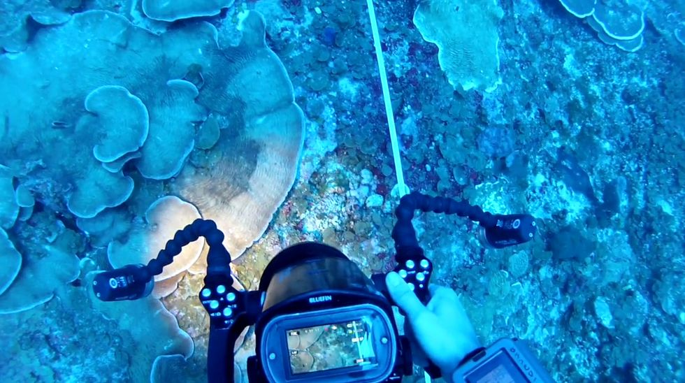 Deep Coral Research Team Needs Your Help