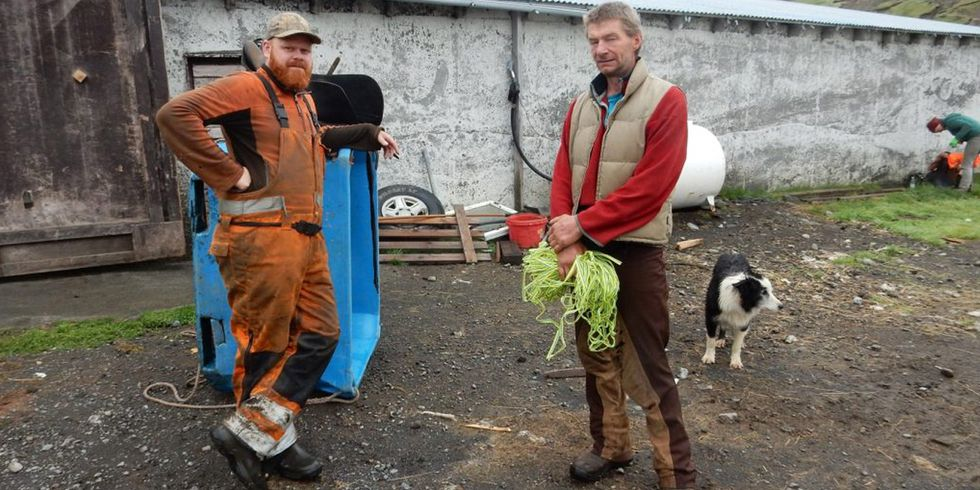 Visting Iceland's Food and Farming Community