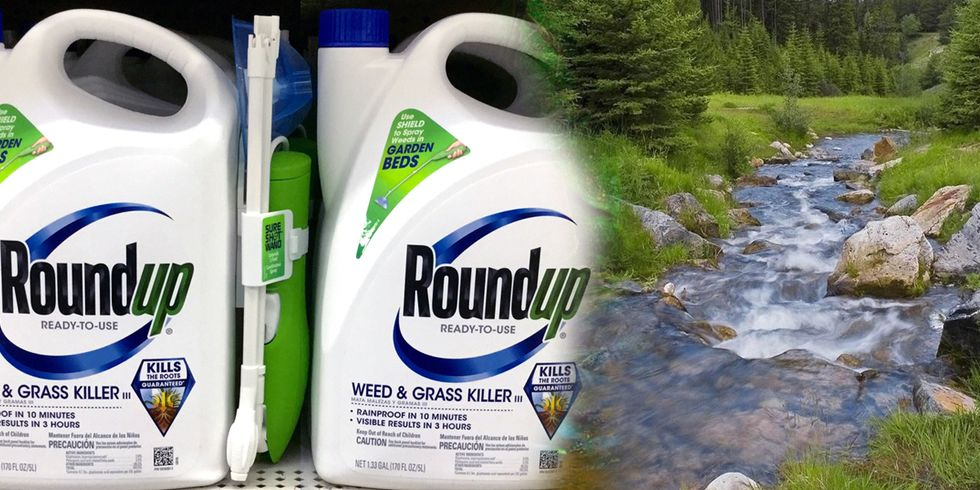 Legal Levels of Roundup Pose Risks for Stream Algae