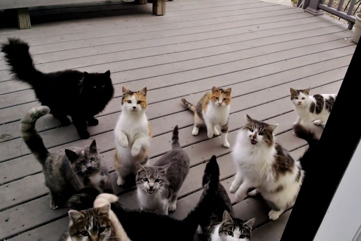 Gang of Kitties Sing Loudly to Man at His Door for Dinner