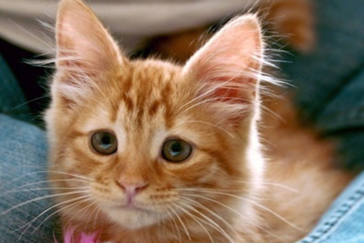 Kitten Born with Always Concerned Look, Now 8 Years Later