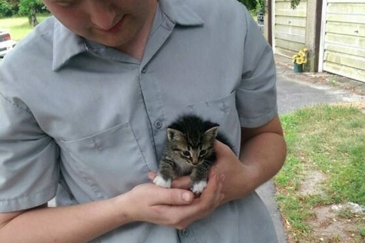 Tiny Stray Kitten Walks Up to Man, Asking to Be Adopted (with Update)