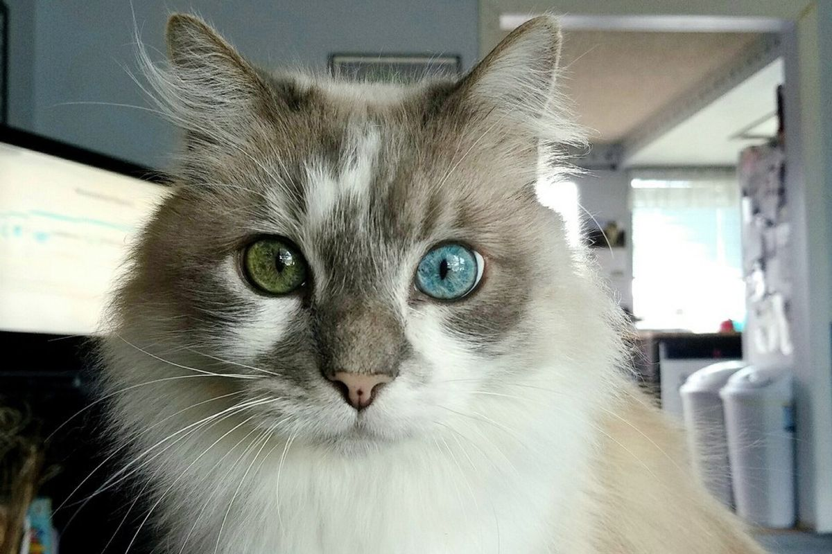 This Senior Cat Changes His Eye Color Over the Year