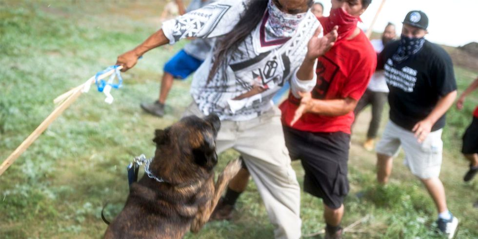 Dakota Access Pipeline Company Attacks Native American Protesters With Dogs and Mace