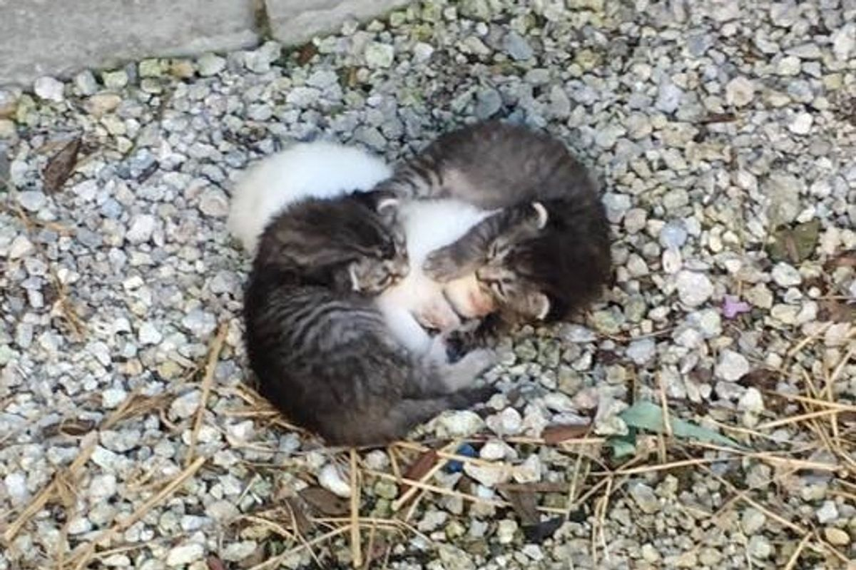 Kittens Found Wrapped Around Their Trembling Sister, Keeping Her Safe.. (with Updates)