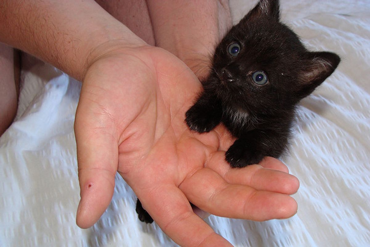 Kitten Found Near Castle Chooses This Guy to Be His Forever Human