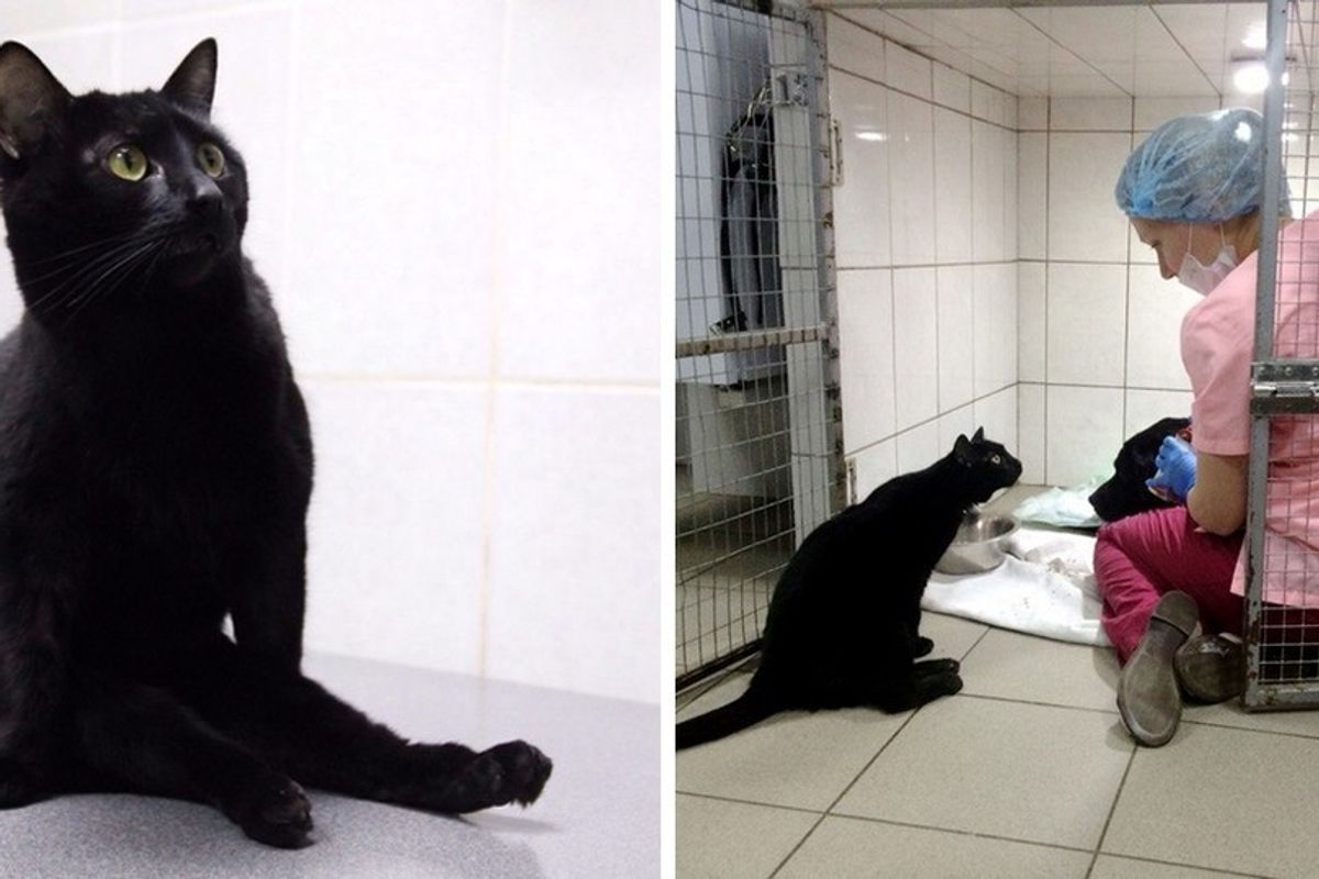 Rescue Cat Can't Walk on His Legs But Helps Sick Animals and Even Saves Their Lives