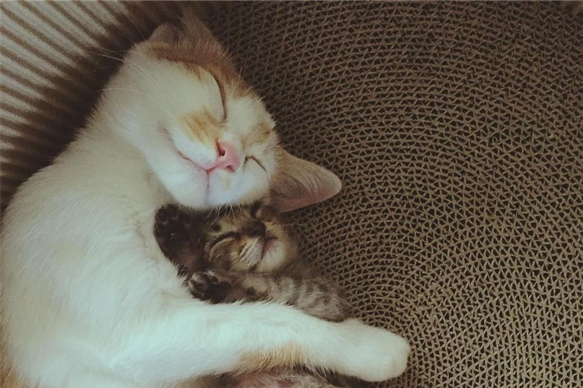 Rescue Cat Takes to Orphaned Tabby and Won't Let Go