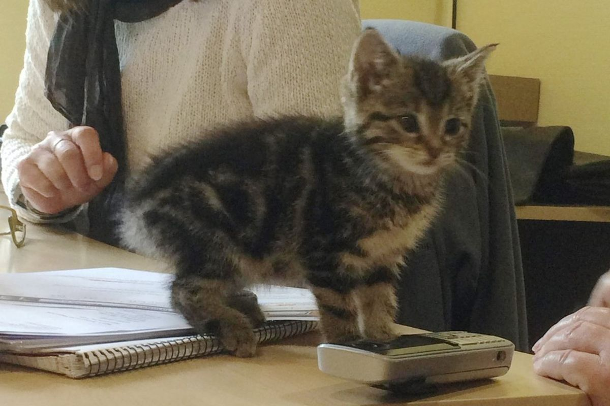 Stray Kitten Strolls Into Office to Offer Employees Some 'Help'