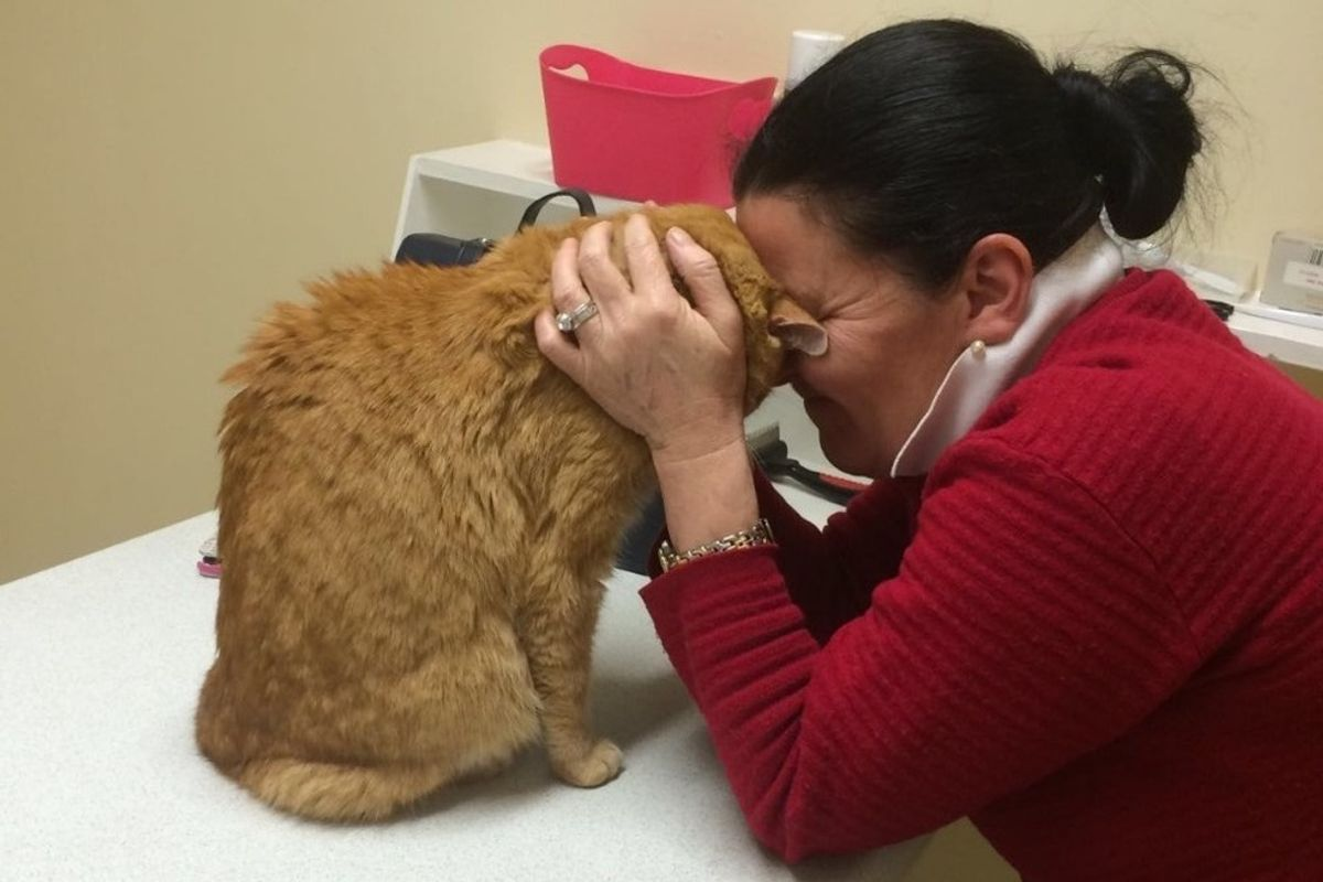 Senior Cat Reunites with His Mom in Ireland After Being Lost in Australia