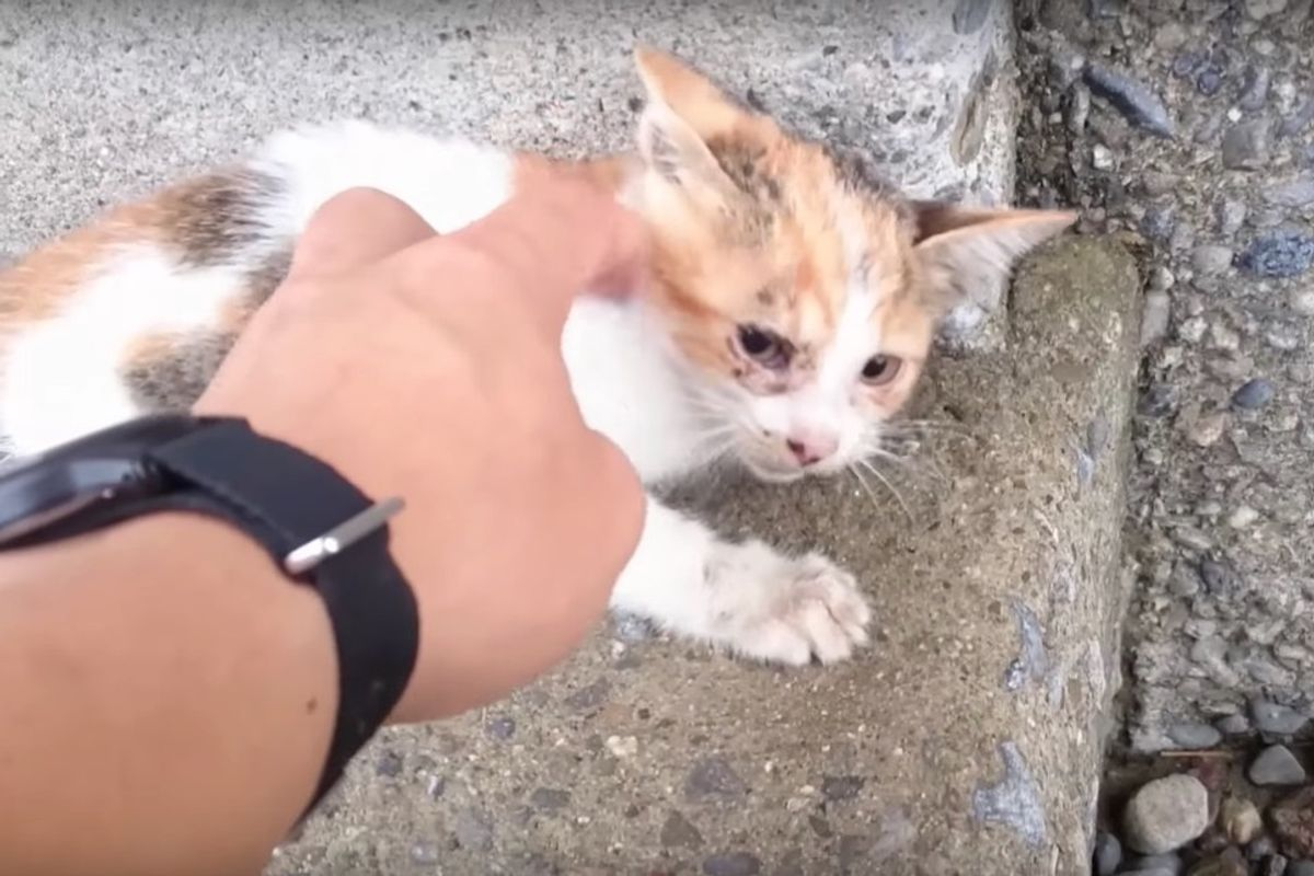 Man Saw Kitten Fall from Bridge and Rushed to Save Her