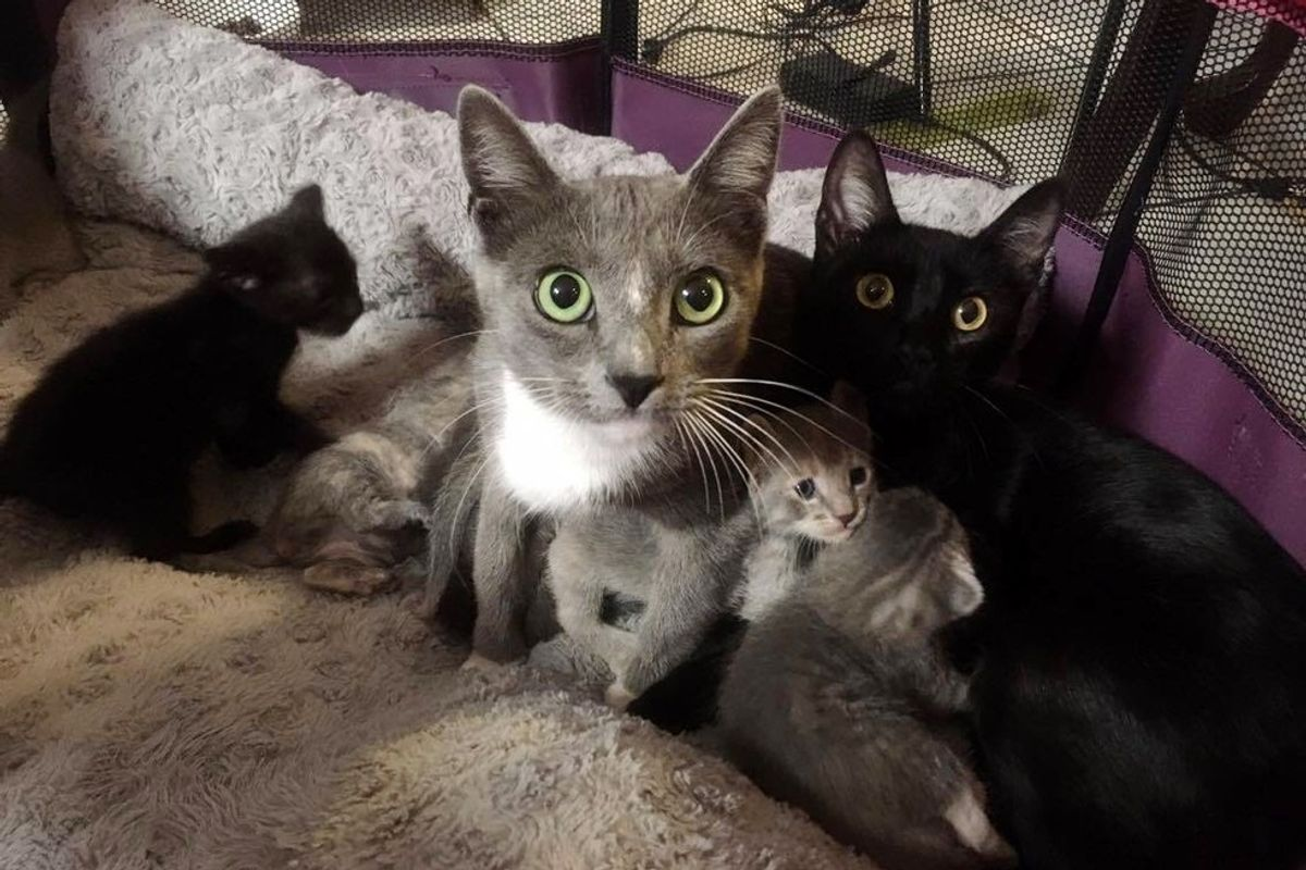 2 Stray Cat Moms Surprise Woman with 8 Babies on Her Patio... (with Updates)