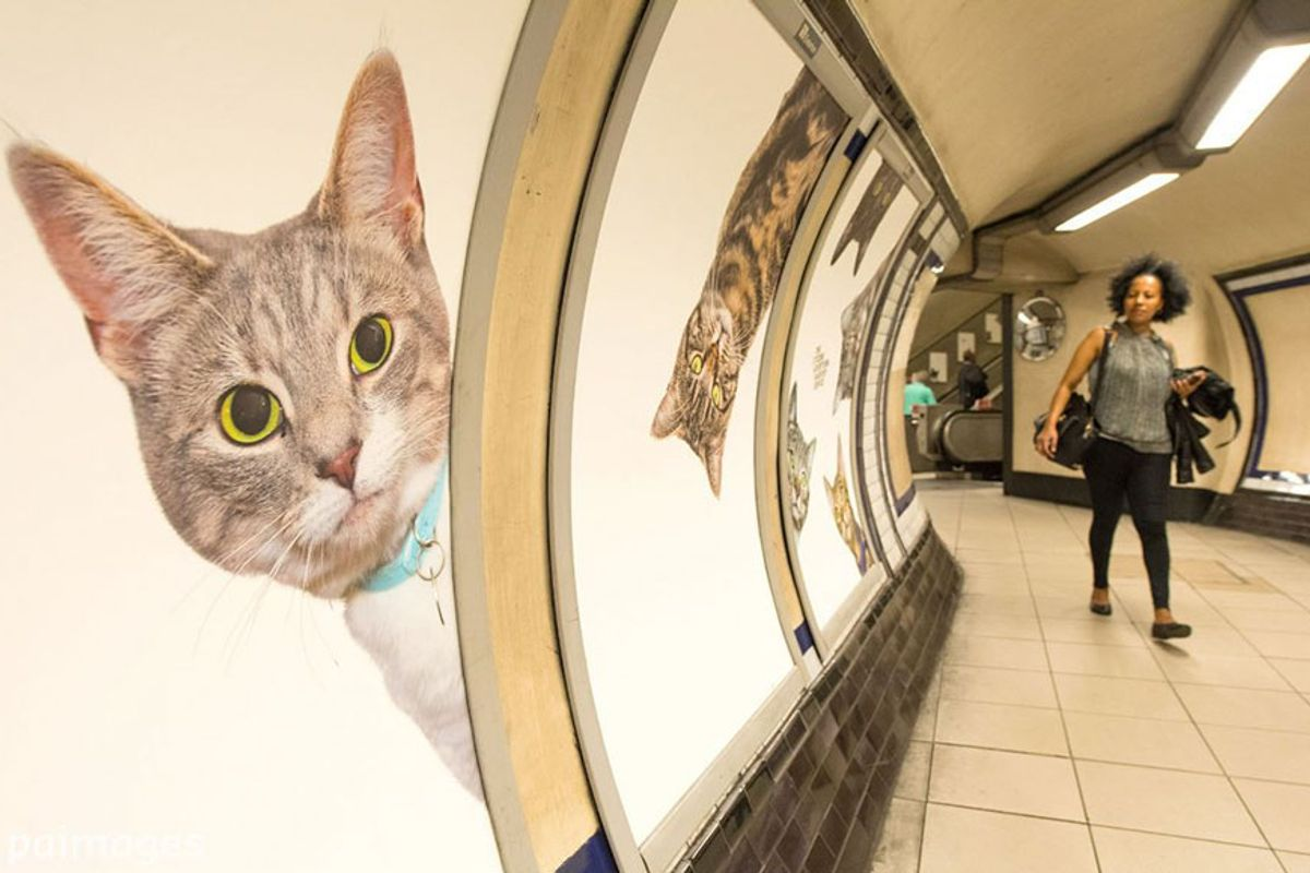 This Underground Station Now Has Photos of Rescue Cats instead of Ads