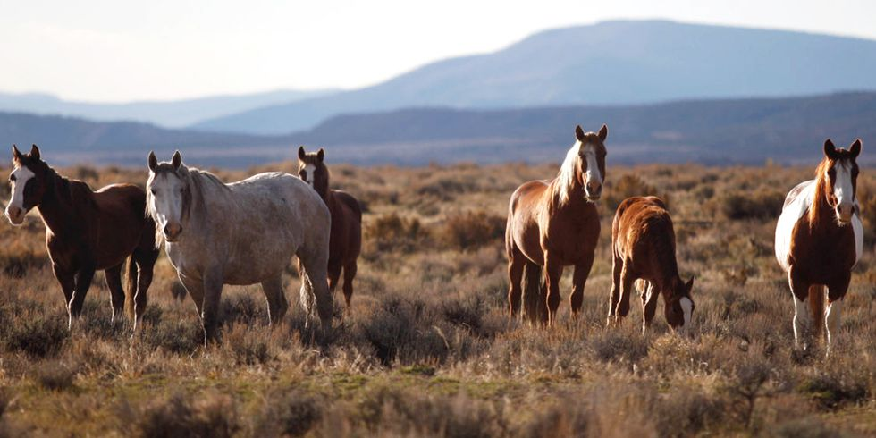 Will the U.S. Government Kill 45,000 Wild Horses?