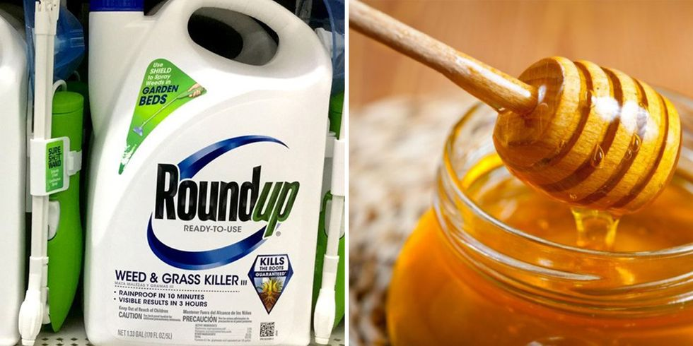 FDA Finds Glyphosate in Honey
