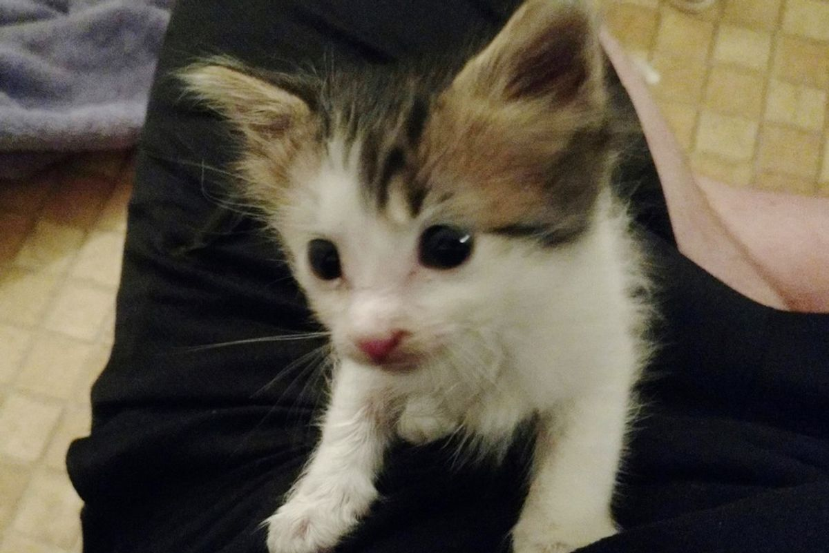 Man Saves Abandoned Kitten, Who Couldn't Have Come at a Better Time