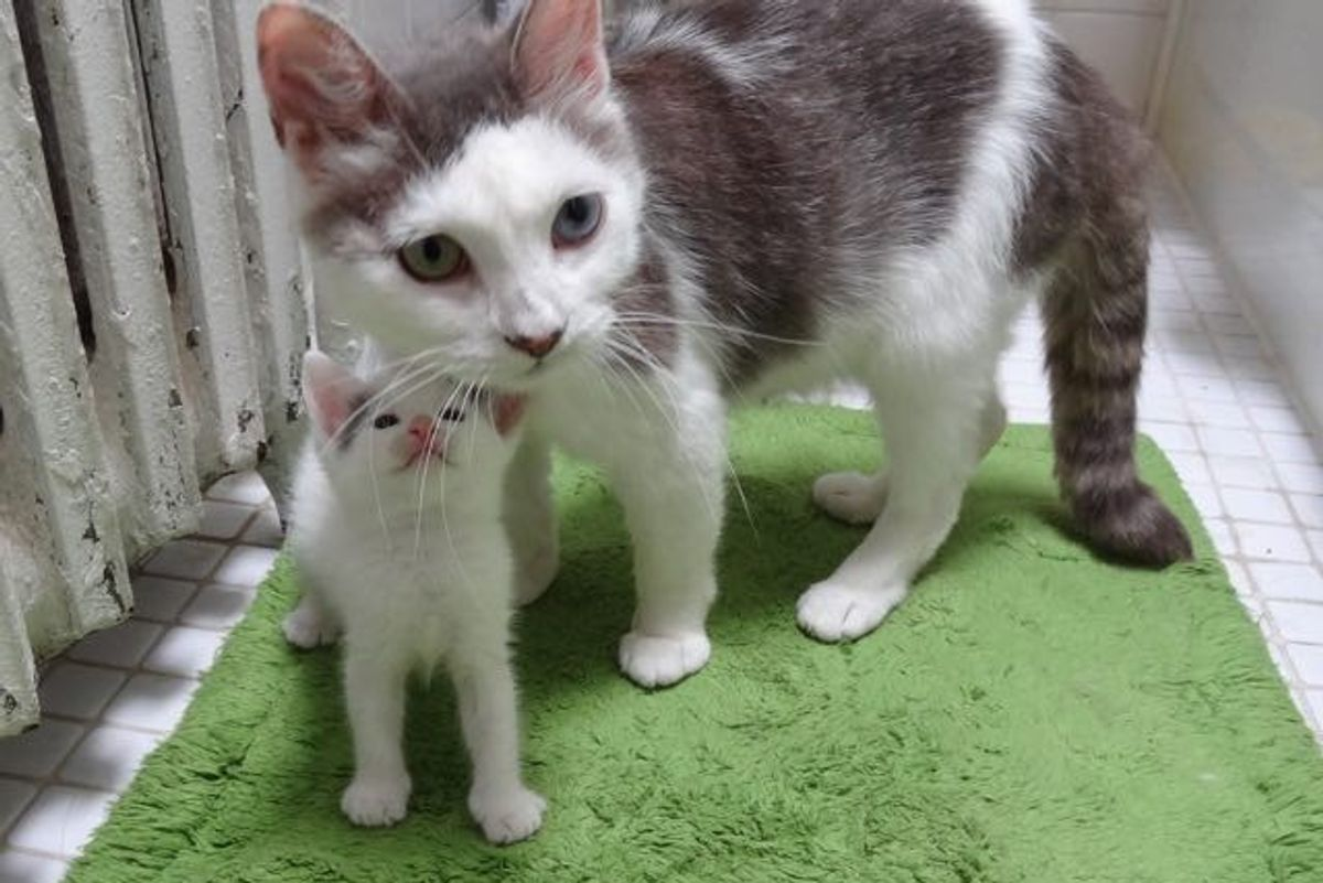 Rescue Cat Mama and Her Babies Help a Teeny Motherless Kitten..