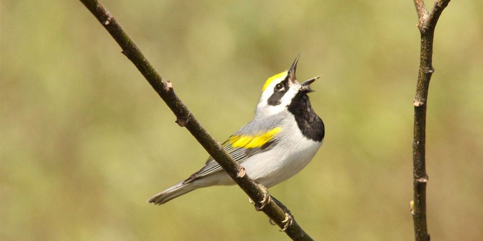 1.5 Billion Birds Lost in North America Since 1970s