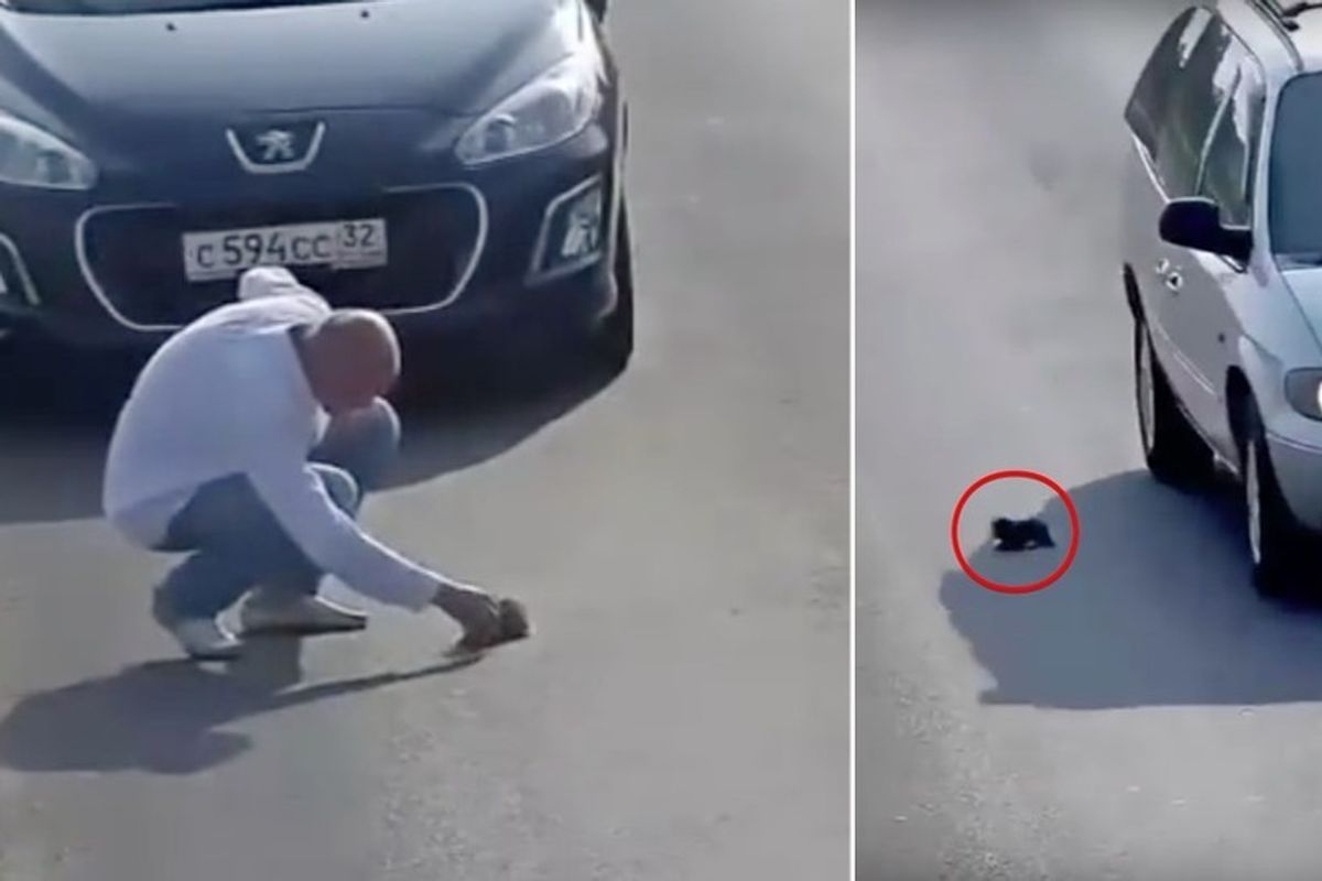 Man Stops in Busy Road to Save Kitten Fallen from Car While Others Just Keep Driving