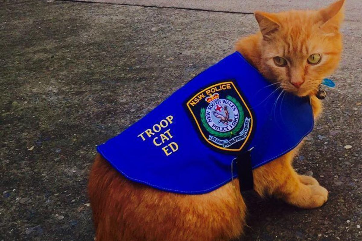 Cat Recruited by Police Caught Sleeping on Duty