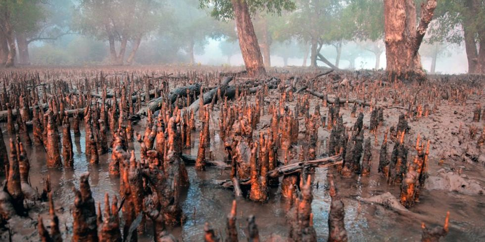 Are U.S. Tax Dollars Financing Destruction of World's Largest Mangrove Forest?