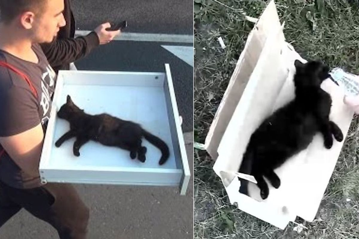 Men Found Lifeless Kitten by Roadside and Brought Him Back to Life