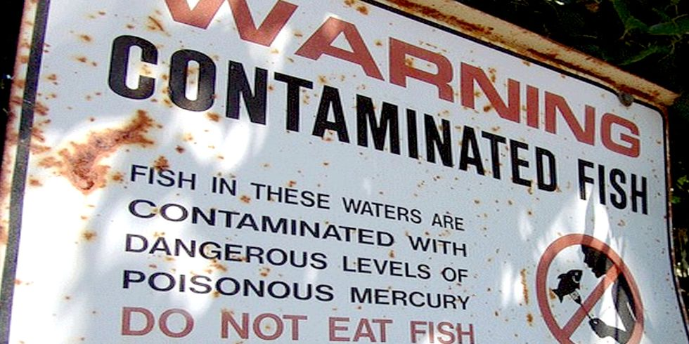 Alarming Levels of Mercury Contamination Found Across Western North America