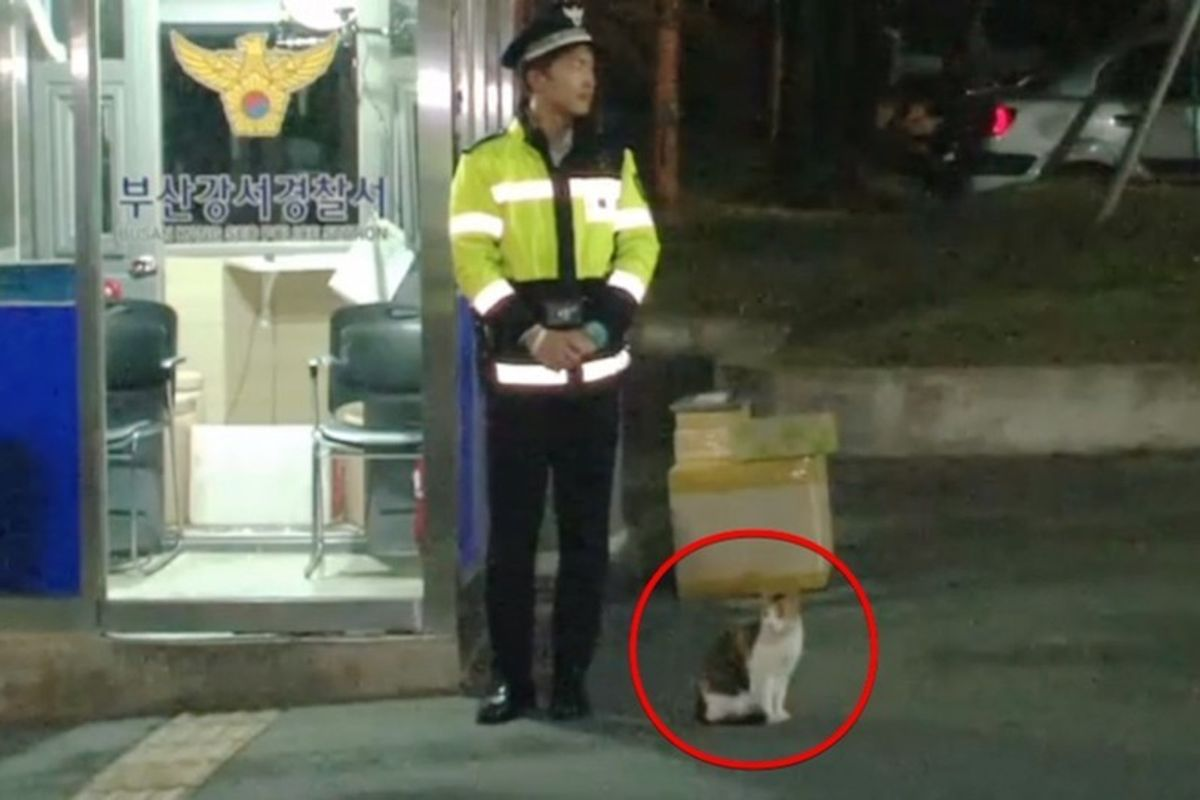 Stray Cat Walks Up to Police Meowing for Help and Gives Them the Most Wonderful Thing