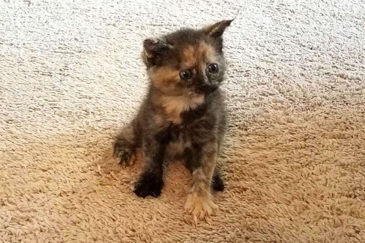 Woman Runs into Storm to Save Soaked Kitten Crawling in the Middle of Street..