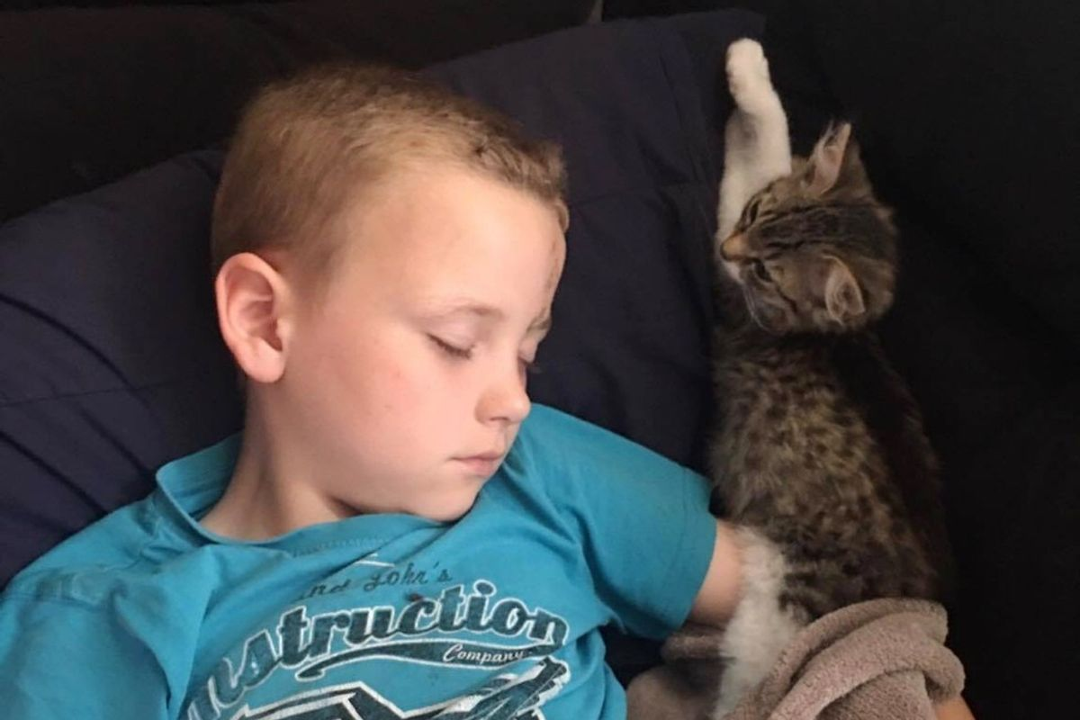 3-week-old Kitten Walks Up to Boy in Distress and Becomes His Guardian Angel... (with Updates)